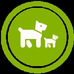 gestation de la chienne